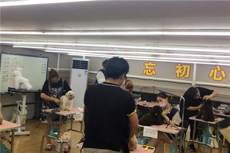 苏州学宠物美容技术要多长时间